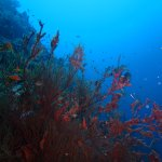 If red is your color, come and dive us to enjoy the color of underwater.