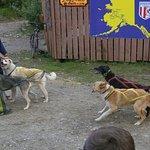 Dog sled demo