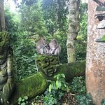 Photo of Sacred Monkey Forest Sanctuary