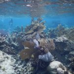 Hol Chan Marine Reserve Foto