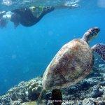 Photo of Seastar Cruises Reef Day Trips