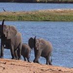Foto de Chobe Safari Lodge