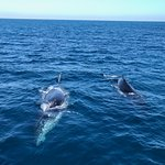 WHALES - Magnificent!