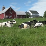 Emergo Farm Photo