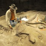 Simulated fossil dig