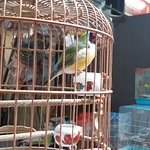 Photo of Bird Garden Yuanpu Street