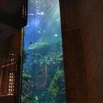 Tennessee Aquarium Foto