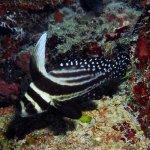 Photo de Ocean Encounters Diving