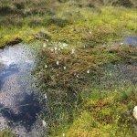 Photo de The Bog of Allen Nature Centre