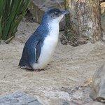 Foto de Featherdale Wildlife Park