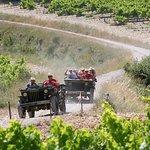 à travers les vignobles vinsobrais