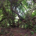 Photo of Derreen Gardens