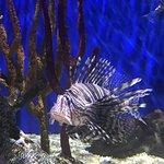 Foto de Georgia Aquarium