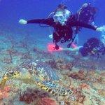 Isabella dive site, St. Maarten July 2017