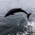 Photo of Pier Dolphin Cruises