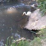 Crane at the Pond