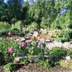 Bellevue demonstration garden