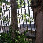 Grown huge trees between iron fences looks amazing in the garden