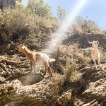 Some goats near the waterfall
