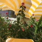 Photo of Hotel Summer Rose