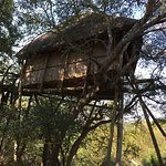 One of the Treehouse units.