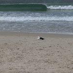 Photo of Beachcomber Bistro