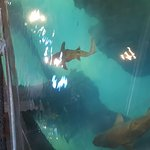 Shark tank with bridge exhibit