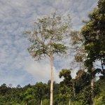 Photo de Belum Rainforest Resort
