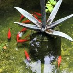 one of the koi ponds - we made a wish here