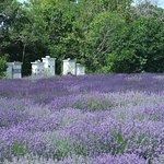 No wonder the honey tastes like lavender