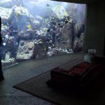 The Lost Chambers Aquarium Foto