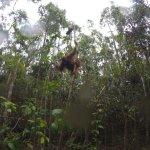 Photo of Wild Orangutan Tours - Day Tours