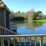 Turtle Lake at the Hamilton Gardens - 3 minutes drive from Argent Motor Lodge