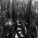 Photo de Six Mile Cypress Slough Preserve