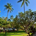 Tropicall Garden