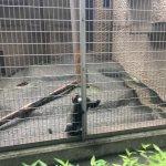 Photo de Ueno Zoo