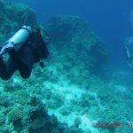 Umm Gammar diving spot (17m depth)