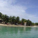 Foto de Coconut Tree Divers