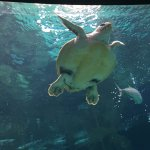 Creta aquarium - only 2,5 km far away! We recommend!