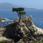 lone tree, 17-mile drive