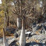 Thorny plants at  Tsiribihina River National Park