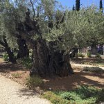Photo of Garden of Gethsemane