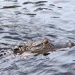 Alligator on our tour