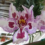 Orchid in lobby