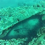 A reef shark about 60ft below us