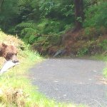 Watch bear catch and eat salmon.