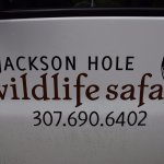 Photo de Jackson Hole Wildlife Safaris - Day Tours