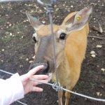 Petting a Deer