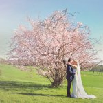 Blossoming tree - Photos by Victoria Walker