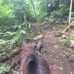 Photo of Discovery Horseback Tours